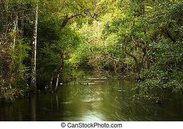 Sweetwater Strand in Big Cypress National Preserve, Florida...