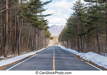 Winter road in snowy forest on a sunny day