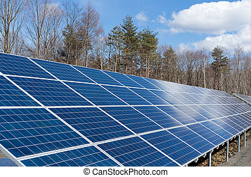 Solar panel with forest