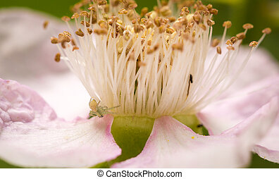 Close up of flower stamen and petals - Close up of flower...