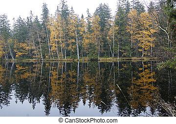 Kladska peats - trees on the bank