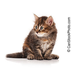 Curious siberian kitten - Cute fluffy siberian kitten...