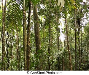 Interior of tropical rainforest - In rainforest in the Upper...