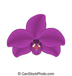 Purple orchid isolated on a white background illustration