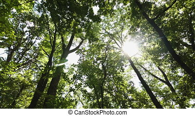Looking up through trees - Slide looking up for sun through...