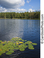 finnish summer lake  with waterlilies