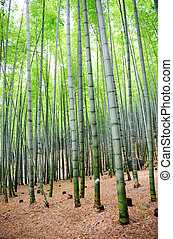 bamboo forest - bamboo trees in asian country