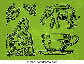 Tea picker woman, tea leaves, cup, elephant. Vector engraved vintage isolated illustration