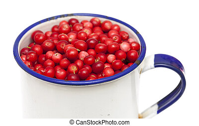 freshly picked lingonberries isolated on white background