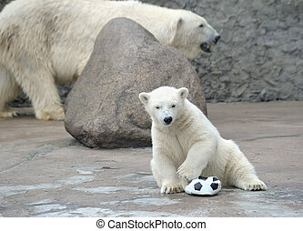 Little white polar bear with ball - Little white polar bear...