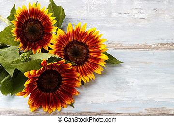 yellow sunflowers background