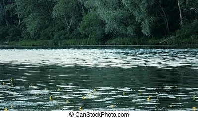Beautiful summer waterscape with yellow lillies and trees...