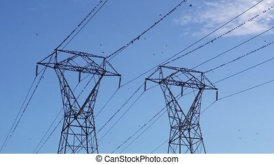 Birds flock on electric pylon - Ravens on electrical wires...