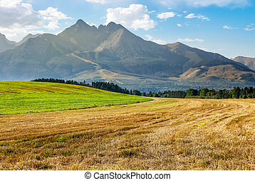 rural field in Tatra mountains - Tatra mountains in evening...