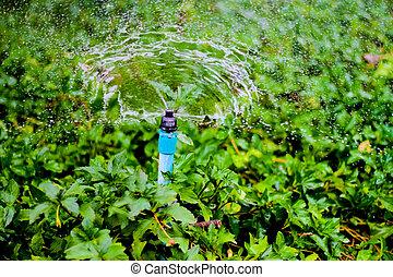 sprinkler water working in the garden