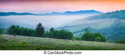 Colorful summer scene in the foggy mountains. Few minutes...