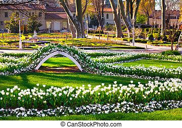 Marvellous white tulips in the Gulhane Rosehouse park,...