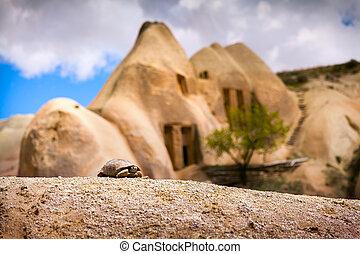 tortuga, imagen, vecindad,  uchisar, pequeño, castillo