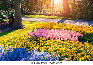 Marvelous flowers beautiful outdoor scenery in Netherlands,...