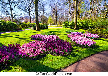Marvellous hyacinth flowers in the gardens Beautiful outdoor...