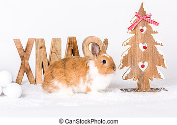 happy christmas time - postcard design cute bunny with...