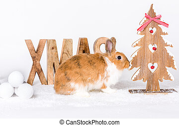merry christmas - postcard design cute bunny with christmas...