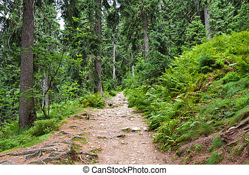 Tourist path in the deep green forest