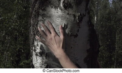 the female hand strokes a birch trunk ,