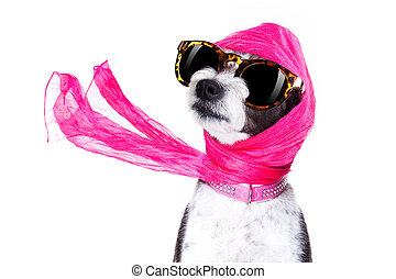 diva chic dog - chic fashionable diva luxury cool dog with...