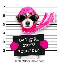 diva chic dog - diva lady girl dog posing for a lovely...
