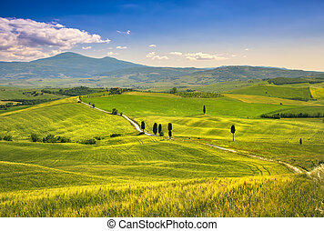 Tuscany landscape, rural road, trees and wheat field Crete...