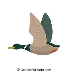 Flying mallard drake. Duck hunting. Vector wild bird. Flat...