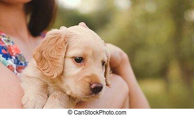 Girl irons a little puppy