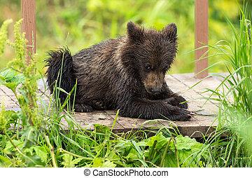 pequeño, marrón, oso, en, Puente, cerca, a,...