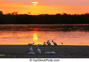 Sunset at Sanibel island, Florida - Sunset at Ding Darling...