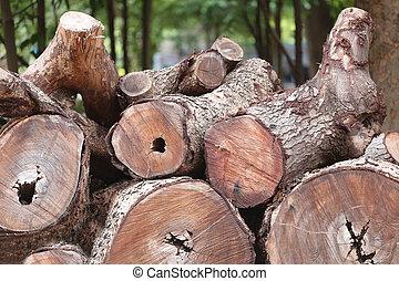 corte, ilegal, leñadores, pila, bosque, afuera, madera