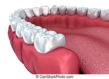 Denture isolated on white Medically accurate 3D illustration...