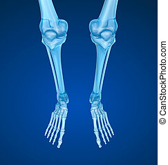 Foot human radiography scan, Medically accurate 3D illustration