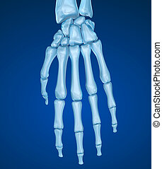 Human wrist anatomy. Medically accurate 3D illustration