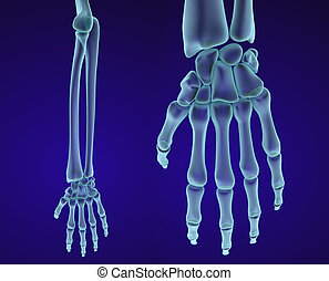 Human hand anatomy Medically accurate 3D illustration