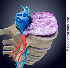 Spinal cord under pressure of bulging disc. Medically accurate 3D illustration