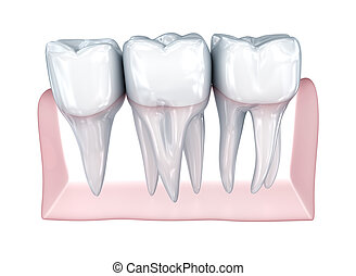 Teeth on white background. Concept icon.  Medically accurate 3D illustration