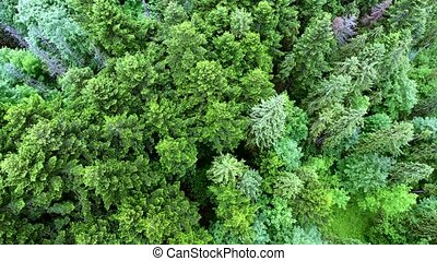 aerial view of the forest - top down view of the forest