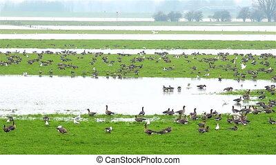 The dutch delta birds near several river streams in The...