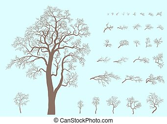 Set of branches and tree formed from these branches.