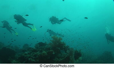 divers over sand - dive students with instructor in shallow...