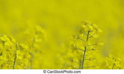 shot transition colorful rapefield close 2