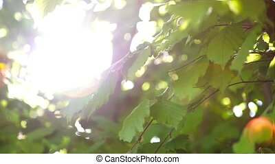 Sunshine with highlights through the spring green foliage -...