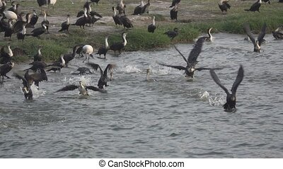 Many cormorants start flying in slow motion - Detailed view...