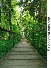 Suspension bridge ferriage in the woods.